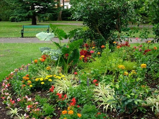 fleurs-jardin-anglais